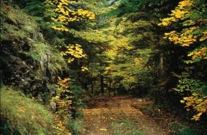 Μονοπάτι μέσα στο δάσος
