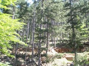 Δάσος στη Βάλια Κάλντα
