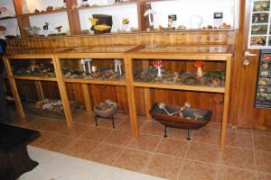 Μουσείο Μανιταριών