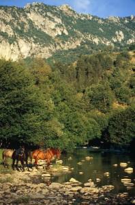 Ιππασία στον Όρλιακα - Τα άλογα ξαποσταίνουν
