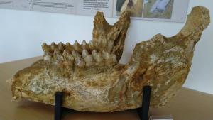 Μουσείο Φυσικής Ιστορίας στη Μηλιά Γρεβενών
